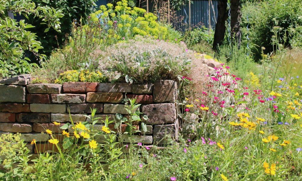Förderung von Insektenvielfalt & Bachpatenschaften in Ennigerloh