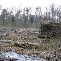 Ruine Nienburg
